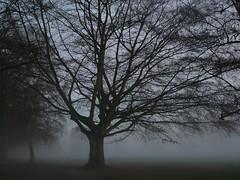 Fog in the War Memorial Park Coventry (Sadieshatterly) Tags: trees coventry warmemorialpark sadieshatterly