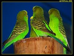 Knights of the round table ($PHPhoto) Tags: green birds zoo picnik beginnerdigitalphotographychallengeswinner beginnerdigitalphotographychallengewinner