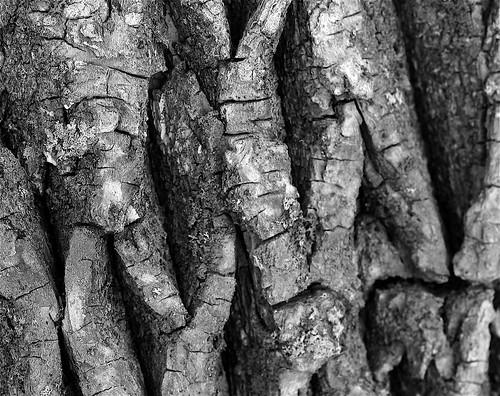 bark series 4