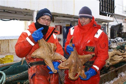 Thumb Fotos de nuevas especies de animales en la Antártida