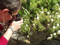 2 in 1 - Gi e i fiori ({to} bead free) Tags: iris gio firenze giovanna michelangelo piazzale giardino angelgio angelgi francesca78foto