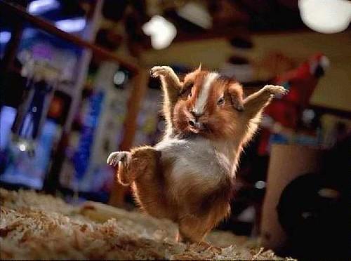 Hamster Kung Fu