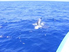 Dolphins - DSCF2181