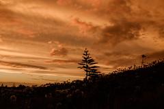 Waiinu: 8.2.2017 at 19:27h (m+m+t) Tags: dscf36851 mmt meredithbibersteindesign newzealand northisland taranaki waiinubeach coast sky evening sunset clouds silhouette trees fujixt1 fujixseries fujimirrorless 1855mm windy gale wild storm outdoors landscape