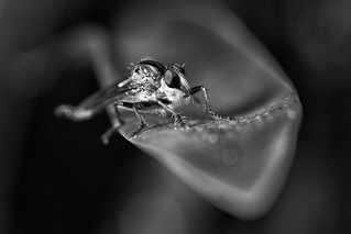 B+W insect