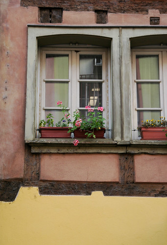 Windows in Alsace -2
