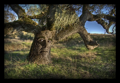 Father Tree (Josh Sommers) Tags: man tree face dad father ent metamorphosis weekendamerica
