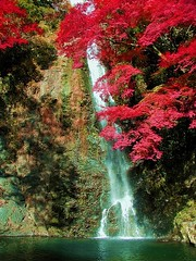 (nobuflickr) Tags: nature japan autumncolors osaka minoo impressedbeauty
