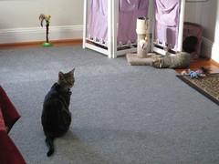 IMG_0109 (fadingembers) Tags: animals stormy kitties bigpurplehouse