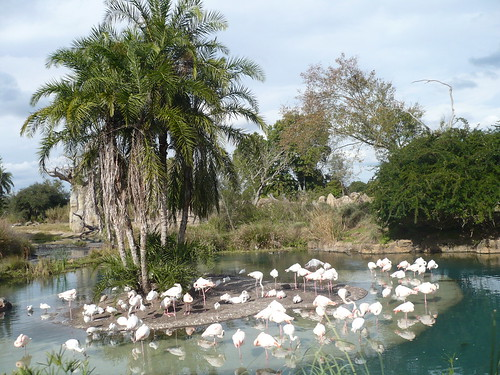 Disney's Animal Kingdom Flamingos