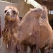 San Diego Zoo 111