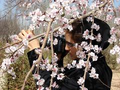 Nature's Bride (Alieh) Tags: flower nature persian spring iran blossom persia iranian  esfahan isfahan  norooz naturelovers      aliehs alieh  matiya   matiyafiroozfar     najnun aznimrokhssssss