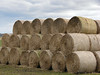 Baling out (Mr Grimesdale) Tags: sony hay bales haybales mrgrimsdale stevewallace dsch2 photofaceoffwinner pfogold mrgrimesdale grimesdale