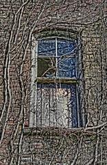 old window CONTRAST (jodi_tripp) Tags: old brick broken window contrast scary vines decay academy joditripp wwwjoditrippcom photographybyjodtripp