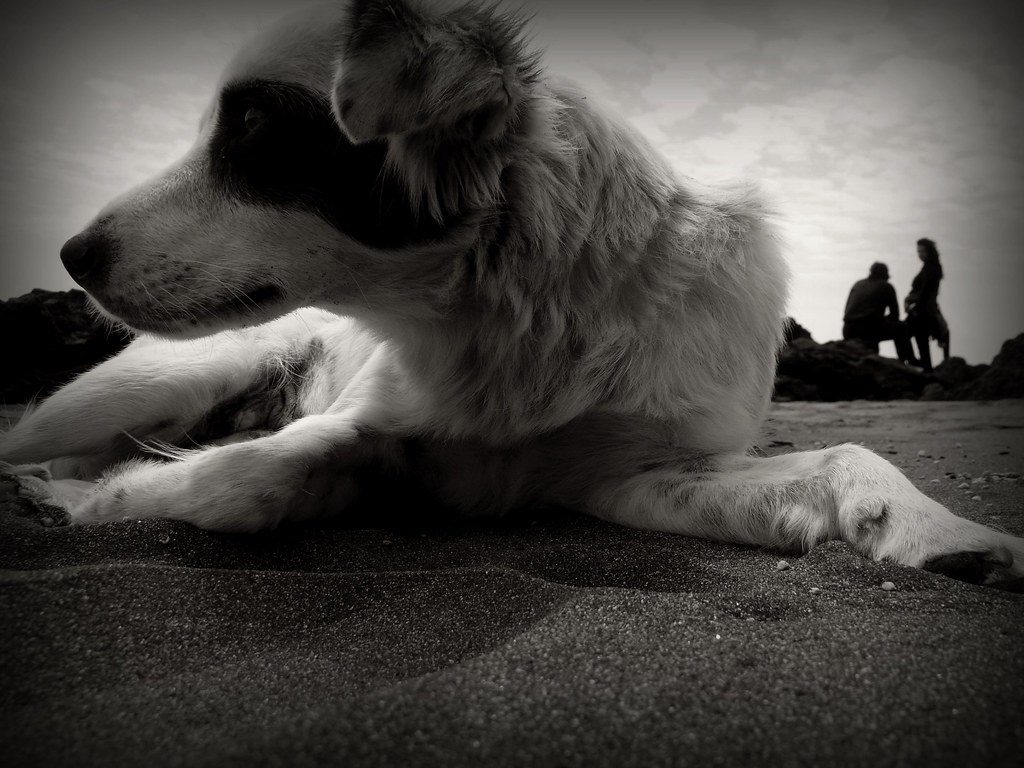 In the company of the dog (1)