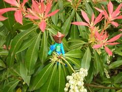 P4270063.JPG (Gail Chris Spinks) Tags: florafauna