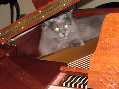 vasha in the piano