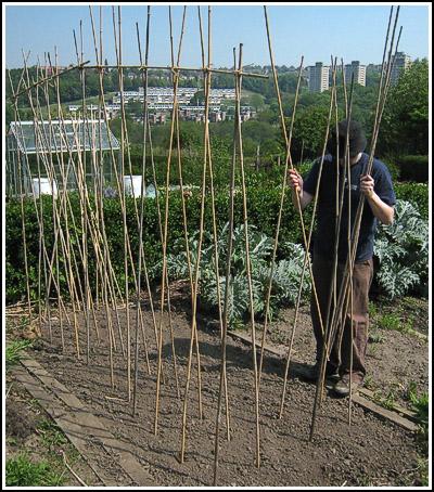 bean poles copy