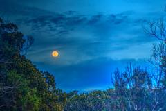Old Devil Moon (Michael F. Nyiri) Tags: moon pointfermin sanpedro california southerncalifornia nightsky fullmoon lunar evening clouds sky
