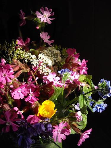 Wild flower poesy