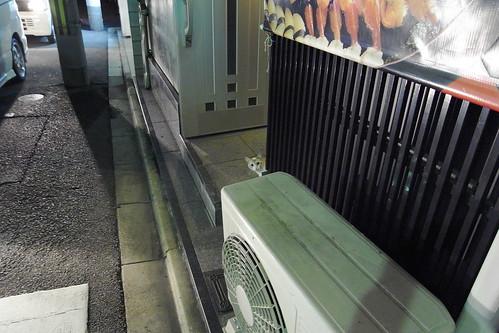 寿司屋の猫