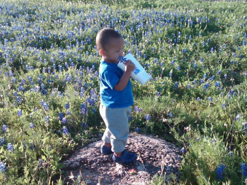 Blue Bonnet1