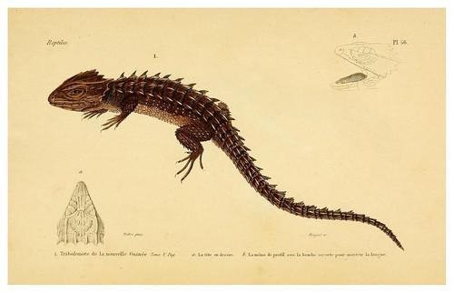 015-Erpétologie générale ou Histoire naturelle complète des reptiles 1834