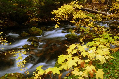 Leaves over the creek