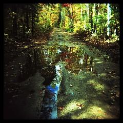 Puddle (Ralph Krawczyk Jr) Tags: road trees color reflection 6x6 wet water puddle xpro michigan crossprocess toycamera perspective lofi ishootfilm plastic dirt squareformat upperpeninsula expiredfilm holga120n ©allrightsreserved 120mediumformat ralphkrawczykjr kodakektachrome400x