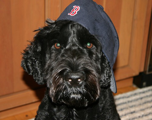 red sox fan