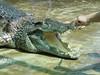 Crocodile - 06 (Crocodile) (gsb_viva) Tags: india nature wonderful superb unique wildlife class 1stclass shani crock wonderfull viewable shaani beautifulcapture natureandwildlife superbshot thatsclass crockodial gsbviva uniqueclass superbclass