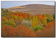 Autumn Paint Palette (Roger Lynn) Tags: autumn trees fall colors leaves moscow arboretum idaho universityofidaho palouse