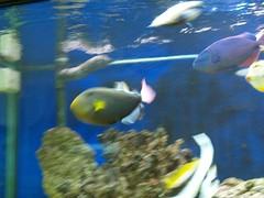 081 (shayoctave) Tags: sea fish tan shay
