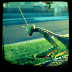 Praying Mantis (ir0cko) Tags: macro prayingmantis s3is canonpowershots3is