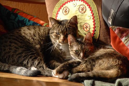 amelie and timoun
