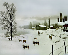The Dairy Farm. Winter Landscape. (Nellie Vin) Tags: winter snow cold tree season landscape country farming agriculture limitededition winterday dairyfarm milkshakes dairycows nellievin bradfordcountypa