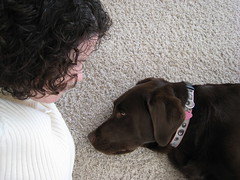 Chocolate Labbie and Mommy: Dakota