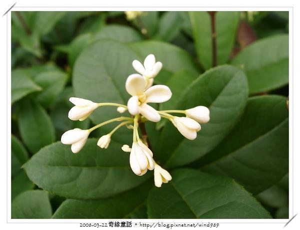R0013252桂花