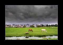 Horses On the road (manlio_k) Tags: horse holland grass clouds cielo prato cavalli manlio medow castagna abigfave manliocastagna manliok