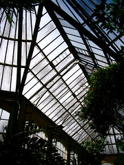 Greenhouse in the Hortus Botanicus
