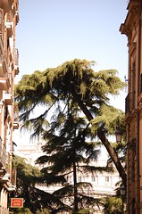 La selva llega a la ciudad (chasquito el roncoso) Tags: madrid flores stream retratos more views caras sombras willy reflejos motos 15000 llus