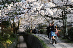 C O U P L E : The Philosopher's Path (mboogiedown) Tags: japan cherry japanese canal spring kyoto path no traditional blossoms culture philosophy sakura kansai michi hanami philosophers testugaku earthasia