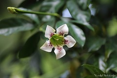Flower (Vinchel) Tags: singapore botanic gardens outdoor people canon 1dx 200mm f2
