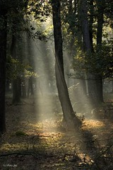 In the Spotlight (Foto Jan) Tags: tree nature canon 300d boom spotlight supershot awesometrees ef100400lis nederlandvandaag