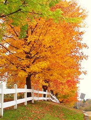 conestoga fall (AmericaninCanada) Tags: ontario fall nature leaves farms soe conestoga piratetreasure beautyisintheeyeofthebeholder mywinners americanincanada shieldofexcellence piratetreasure2 ronstamantphotography