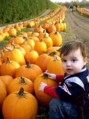 242 - Great Pumpkins! (momtodex2) Tags: pumpkins dex dex365 oct365