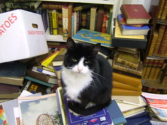 Boris in the Bookshop 3 (eagle stirreth) Tags: cats cat glasgow books boris bookshop voltaire rousseau