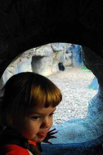 Zoo playground 007