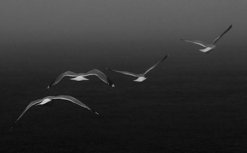 flight into fog 1