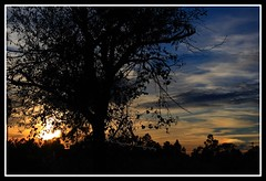 Celestial Aurora (Chrissy Avila Photography (cHrIsSy1554)) Tags: sunset tree silhouette landscape photography offroad florida c © creamofthecrop squared okaloacoocheesloughstateforest ©csquaredphotography chrissy1554 ©christinaavilaphotography ©chrissyavilaphotography wwwchrissyavilaphotographycom